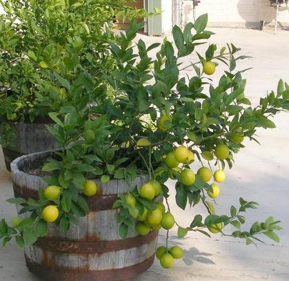 Free Clipart Volcano Clipart furthermore Mexican lime tree in addition Thing furthermore 116 17071 as well Japanese Architects SANAA Have Been Awarded The Most Pr. on home design inspiration